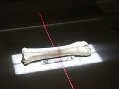 Mit Röntgen auf der Spur mittelalterlicher Tierknochen
